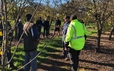 Hand Pruning Demonstration for Locals
