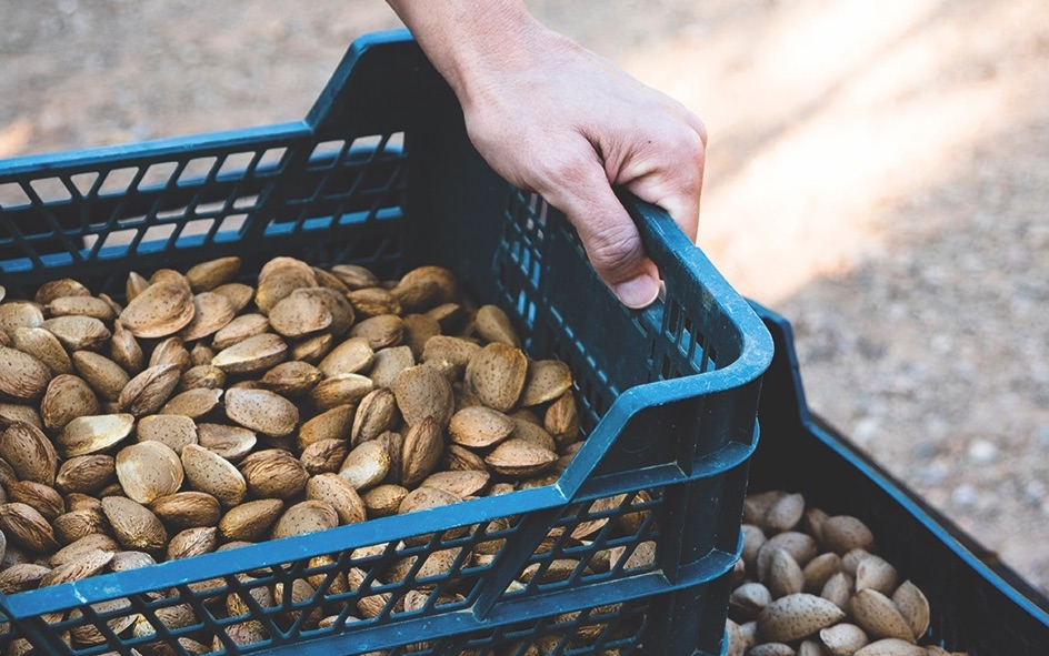 Nut News – September 2019