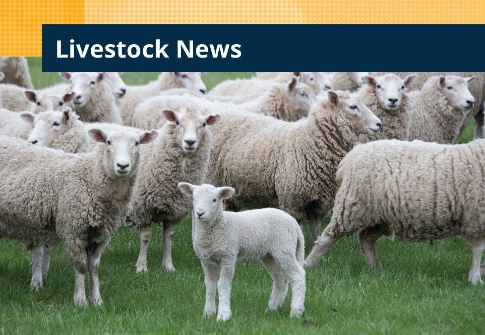 Lambing mortality and survival