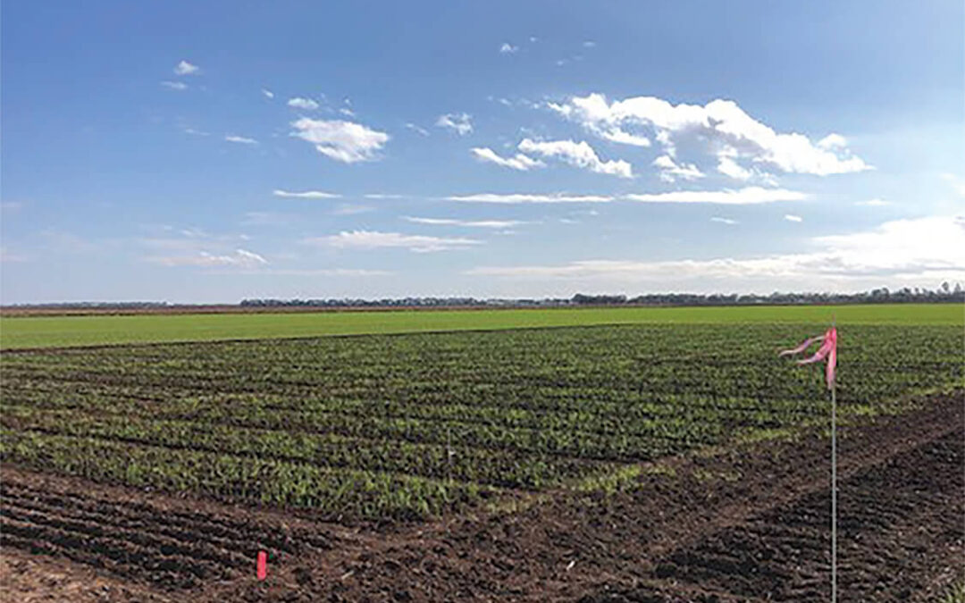 Agronomy Report